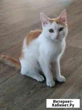 Котик 4 месяца Абакан
