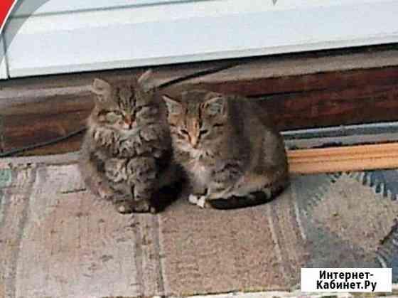 Ищем домик для котяток Коряжма