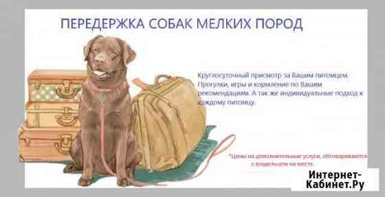 Передержка собак мелких и средних пород Смоленск