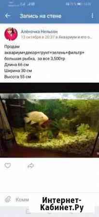 Продам аквариум с рыбой Петрозаводск