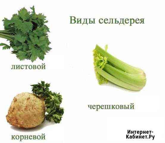 Сельдерей корневой и черешковый Великий Новгород