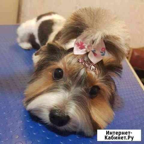 Груминг (стрижка собак) Севастополь