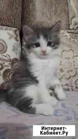 Отдам котенка в добрые руки Хабаровск
