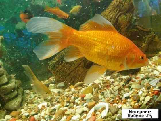 Рыбки Хабаровск
