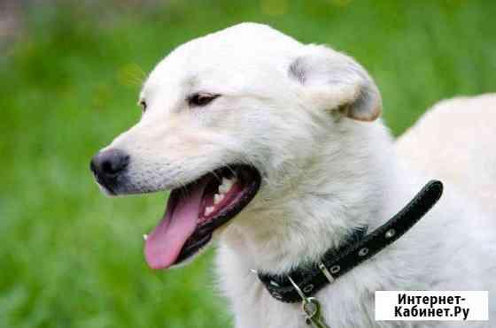 Собака Пермь