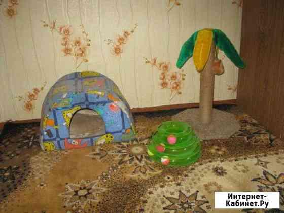 Передержка котиков в домашних условиях Барнаул