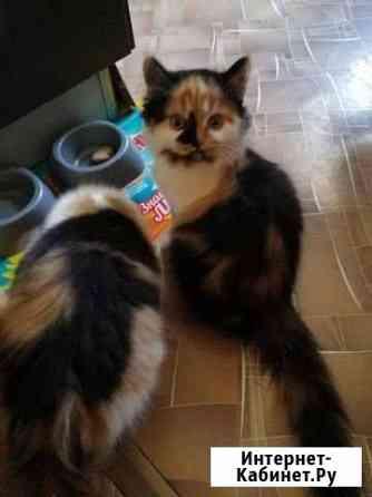 Отдам котят Чита