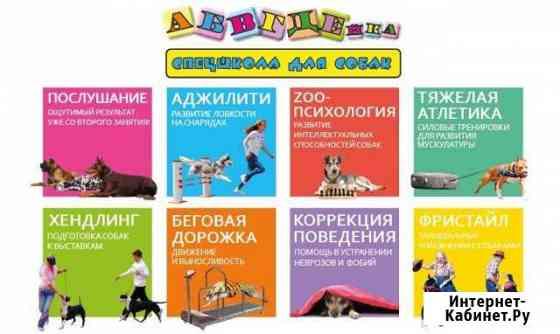 Абвгдейка - школа для собак. Дрессировка от А до Я Комсомольск-на-Амуре
