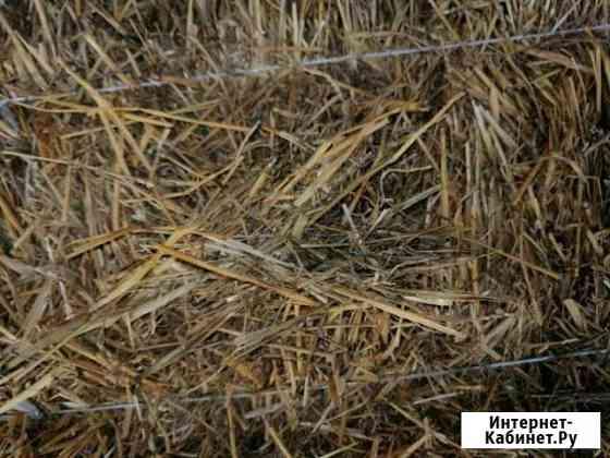 Солома пшеничная Солдатская