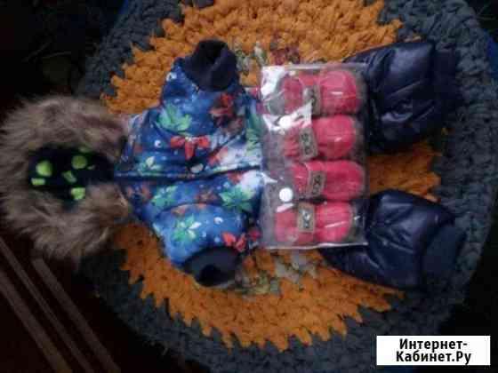 Тёплая одежда для маленькой собачки Сольцы