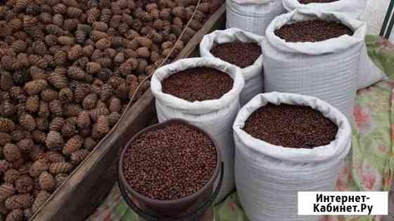 Кедровый орех. Урожай 2019 Собран в Кемеровской об Кемерово