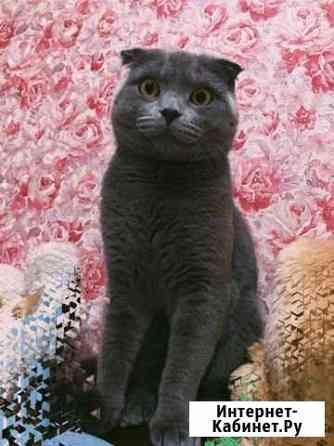 Кот на вязку Тверь