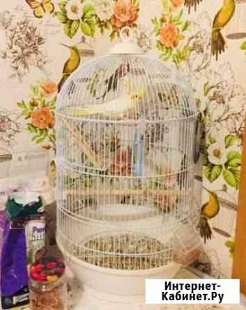 Попугай с большой клеткой Псков