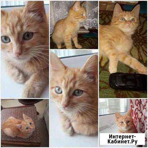 Котёнок Саранск