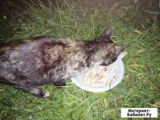 Бездомная кошка Кострома