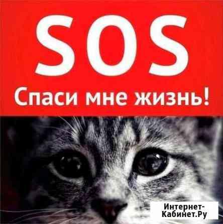 Требуются добровольцы на спасение кошек Томск