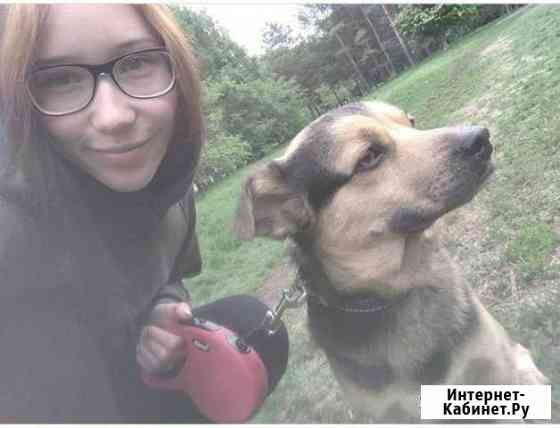 Передержка собак, кошек, грызунов Новосибирск