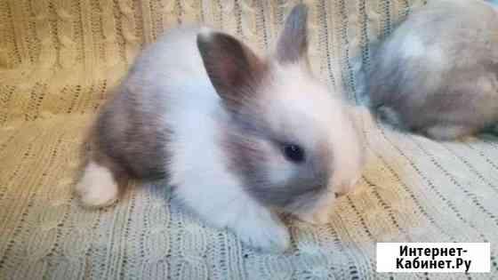 Декоративные карликовые крольчата Горно-Алтайск