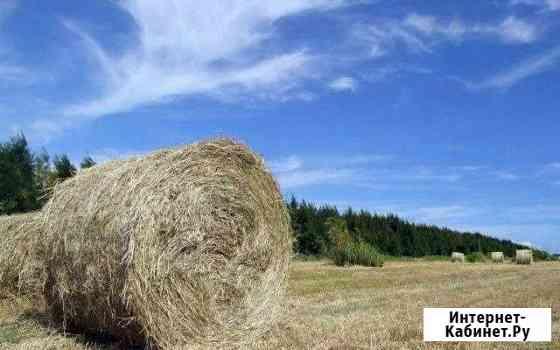 Продам сено в рулонах по 1000-2500 тыс Курумкан
