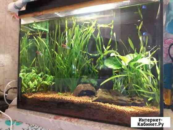 Продаю аквариум Саратов