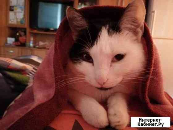 Отдам кошку в добрые руки Чита