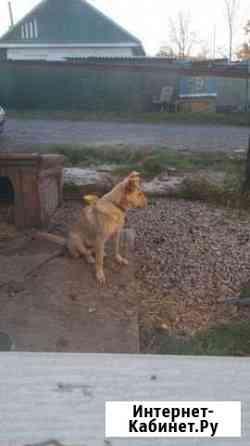 Собака Хабаровск