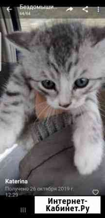 Отдам котят в добрые руки Братск