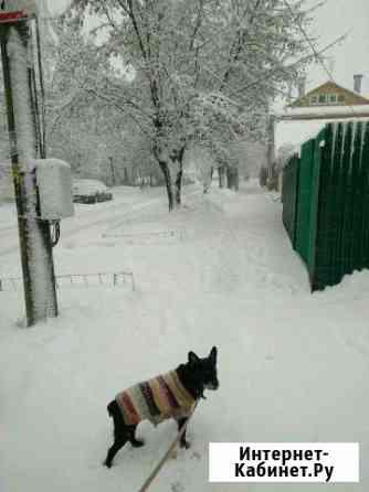 Передержка собак Калуга