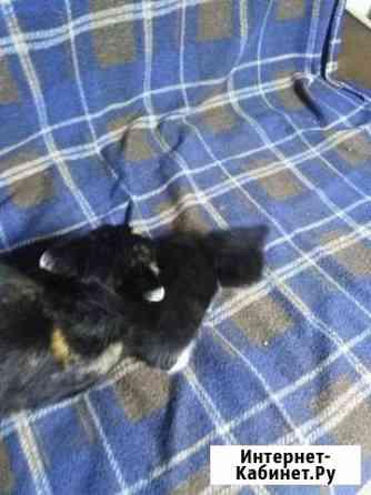 Котёнок очень хороший ласковый к лотку причина Свободный