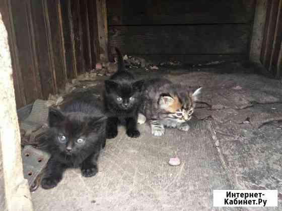 Отдам в добрые руки котят Петропавловск-Камчатский