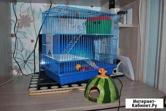 Клетка Кострома