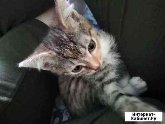 Котёнок Пермь