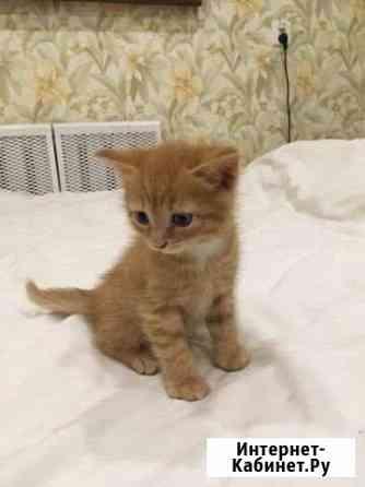 Отдам котят в добрые руки Пермь