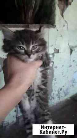 Отдам котята 2месяца ходят в лоток едят всё девочк Чита
