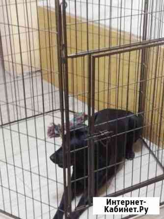 Вольер для собак крупных пород Новосибирск