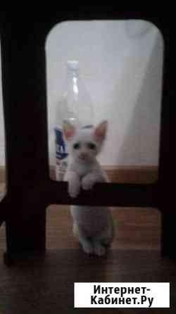 Отдам кота в добрые руки Евпатория