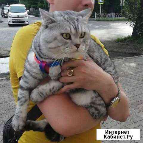 Вязка кота Белогорск