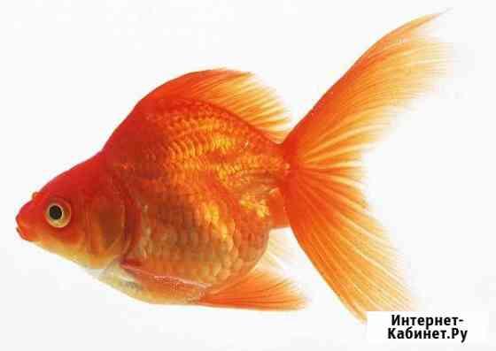 Аквариумные рыбки Дербент