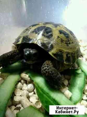 Черепаха Ижевск