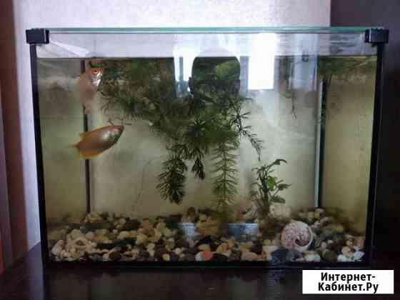Продам аквариум 25 л Севастополь