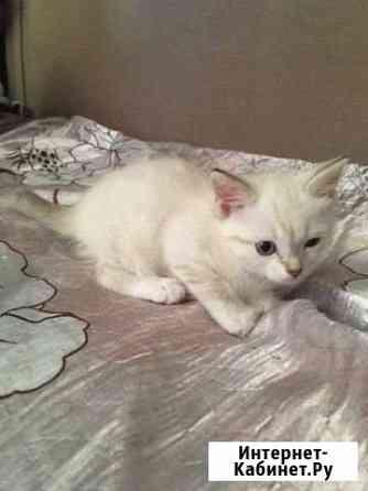Отдам котёнка Мегион