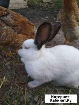 Кролики Зубутли-Миатли
