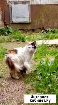 Кошки сибирские в добрые руки Иваново