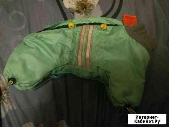 Одежда для собак Северодвинск