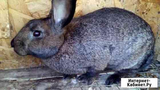 Кролики 1 мес и старше Евпатория