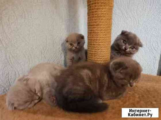 Продаются котята Мичуринск