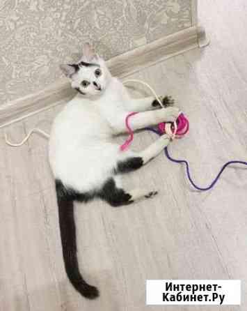 Отдадим прекрасного котенка в добрые руки Чита
