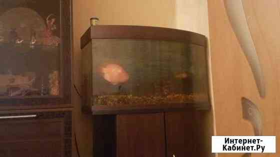 Продам аквариум 100 литров Хабаровск