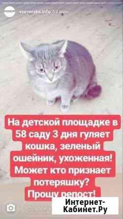Кошки Томск