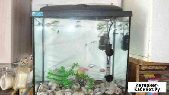 Аквариум с рыбками Алушта